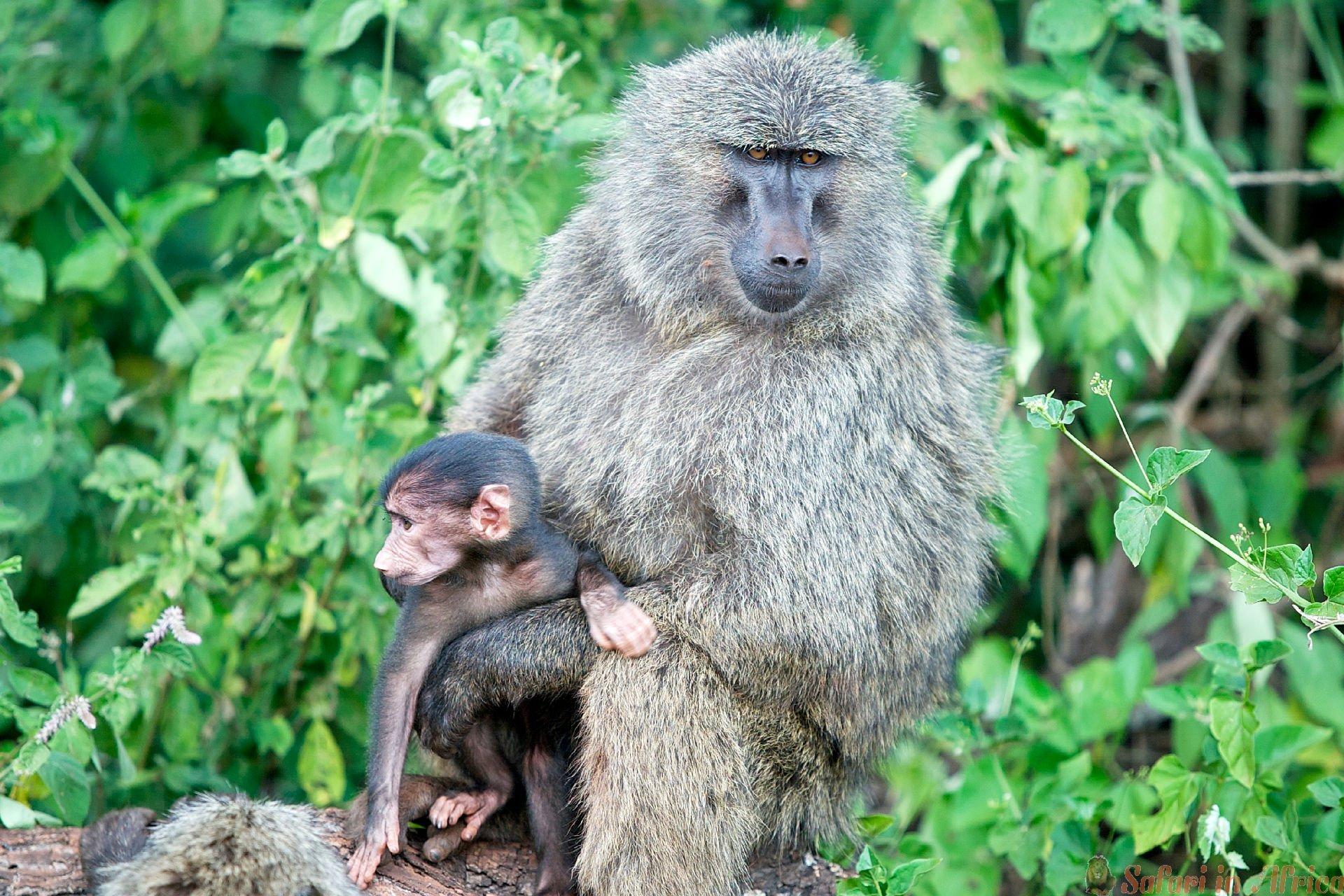 oerang-oetangs-akagera-national-park-rwanda