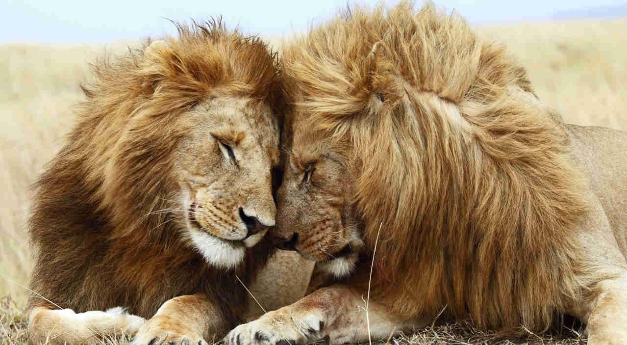 safari-in-africa_leeuwen-paar