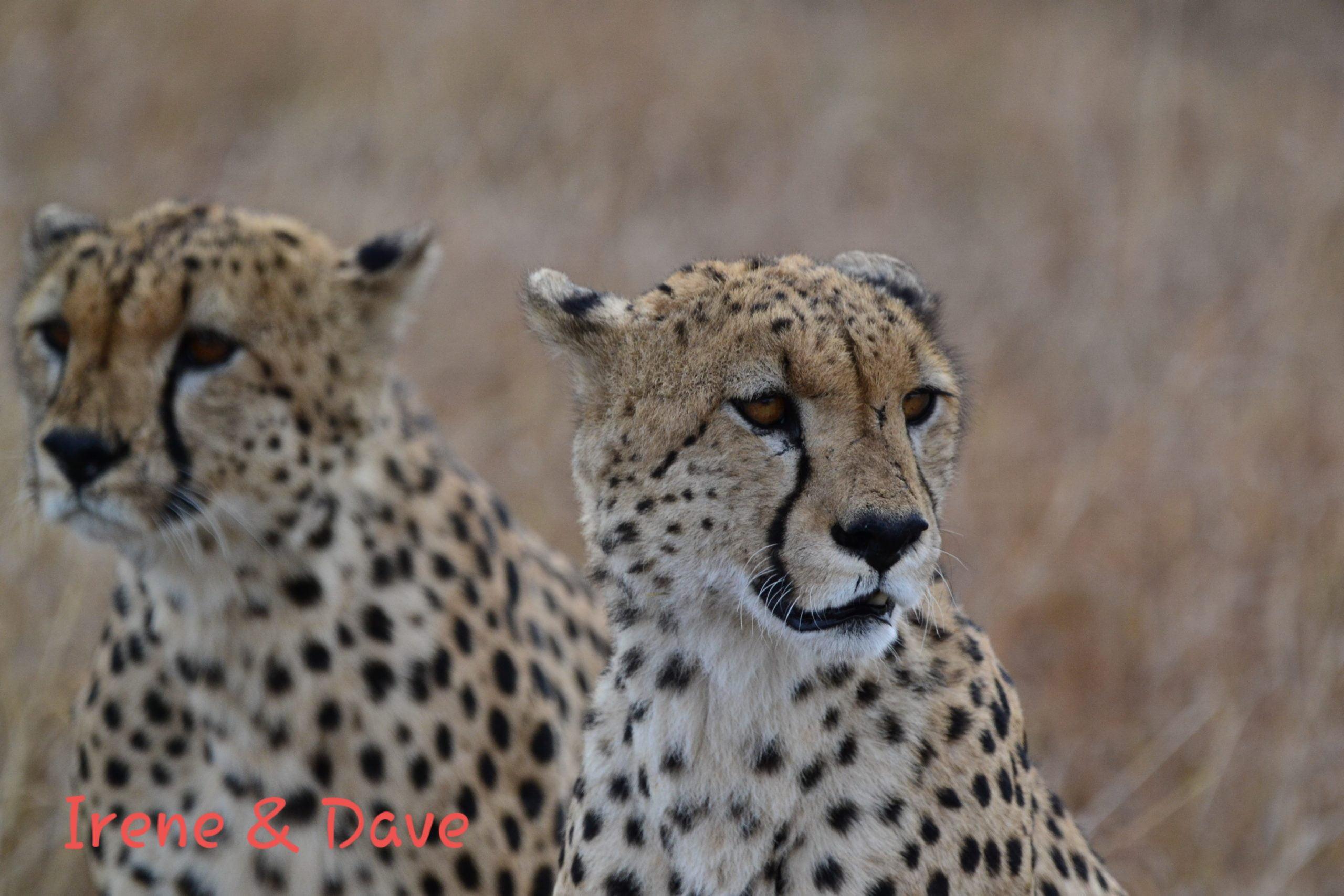 safar-in-kenia-klantreview-4.3
