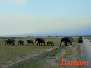 safari-in-kenia-barbara_01