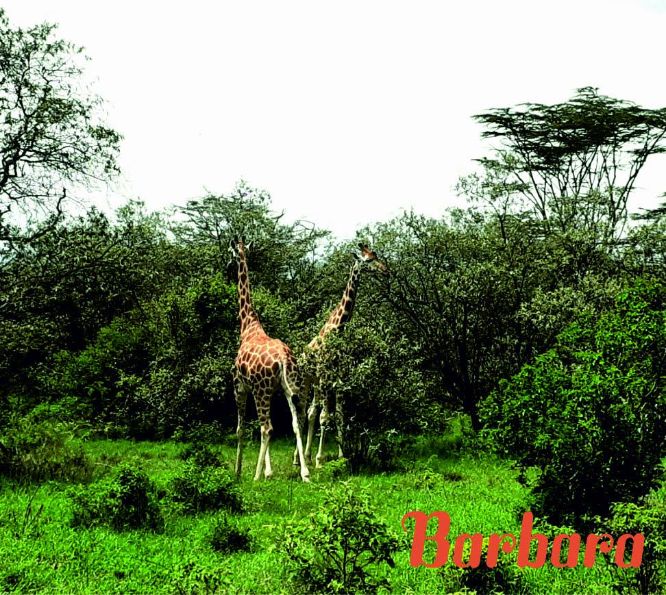 safari-in-kenia-barbara_05