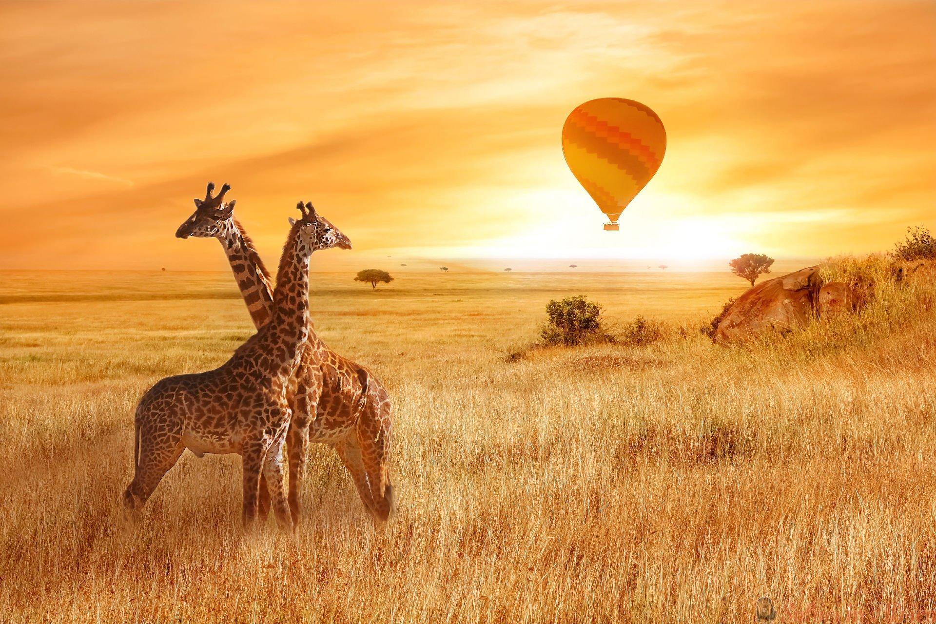 vlucht-van-een-ballon-in-de-lucht-boven-de-savanne