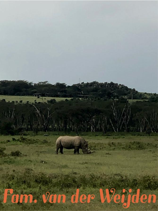 Amboseli neushoorn