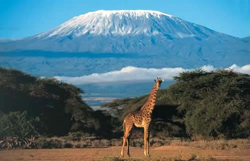 Amboseli_National_Park_6