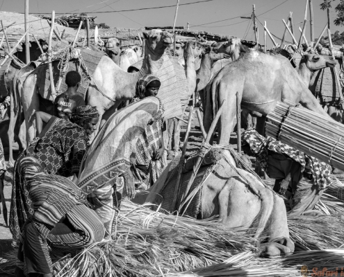 Bati market, Ethiopia. African, livestock Afar B&W