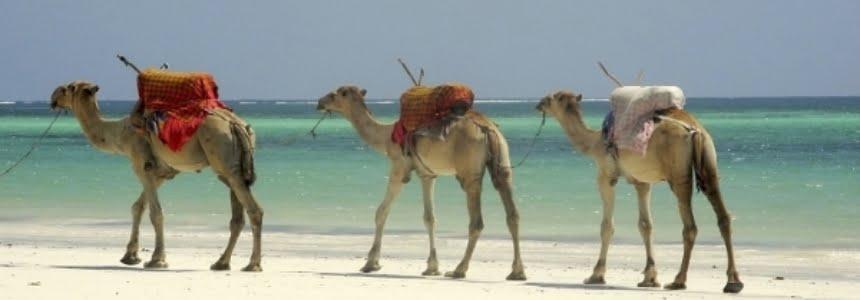 safari-in-kenia-Buitenactiviteiten