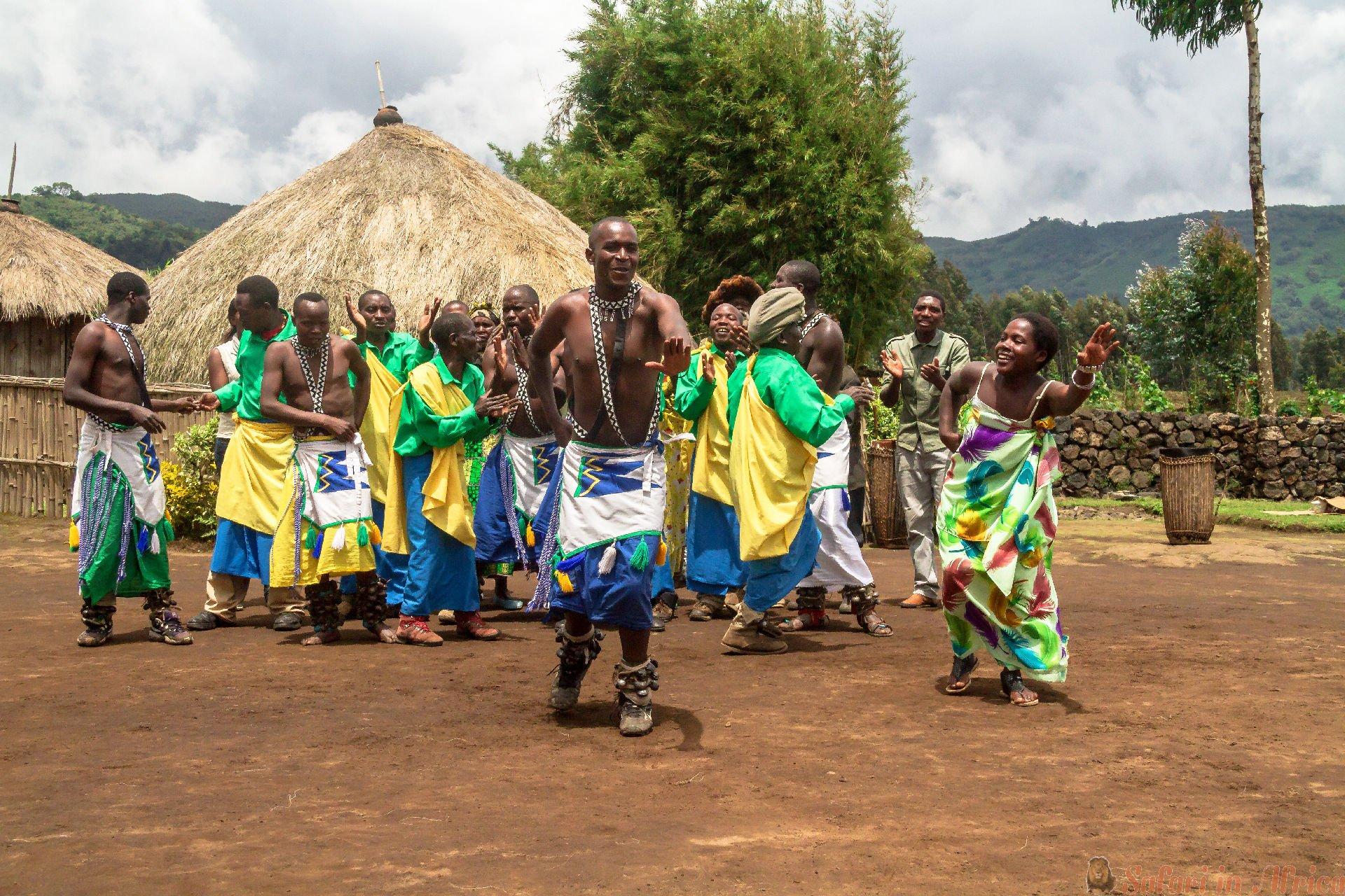 Vier de geboorte van een bedreigde berggorilla in Musanze op 5 november 2013, Musanze, Rwanda