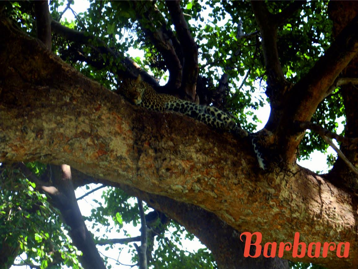 safari-in-kenia-barbara_03