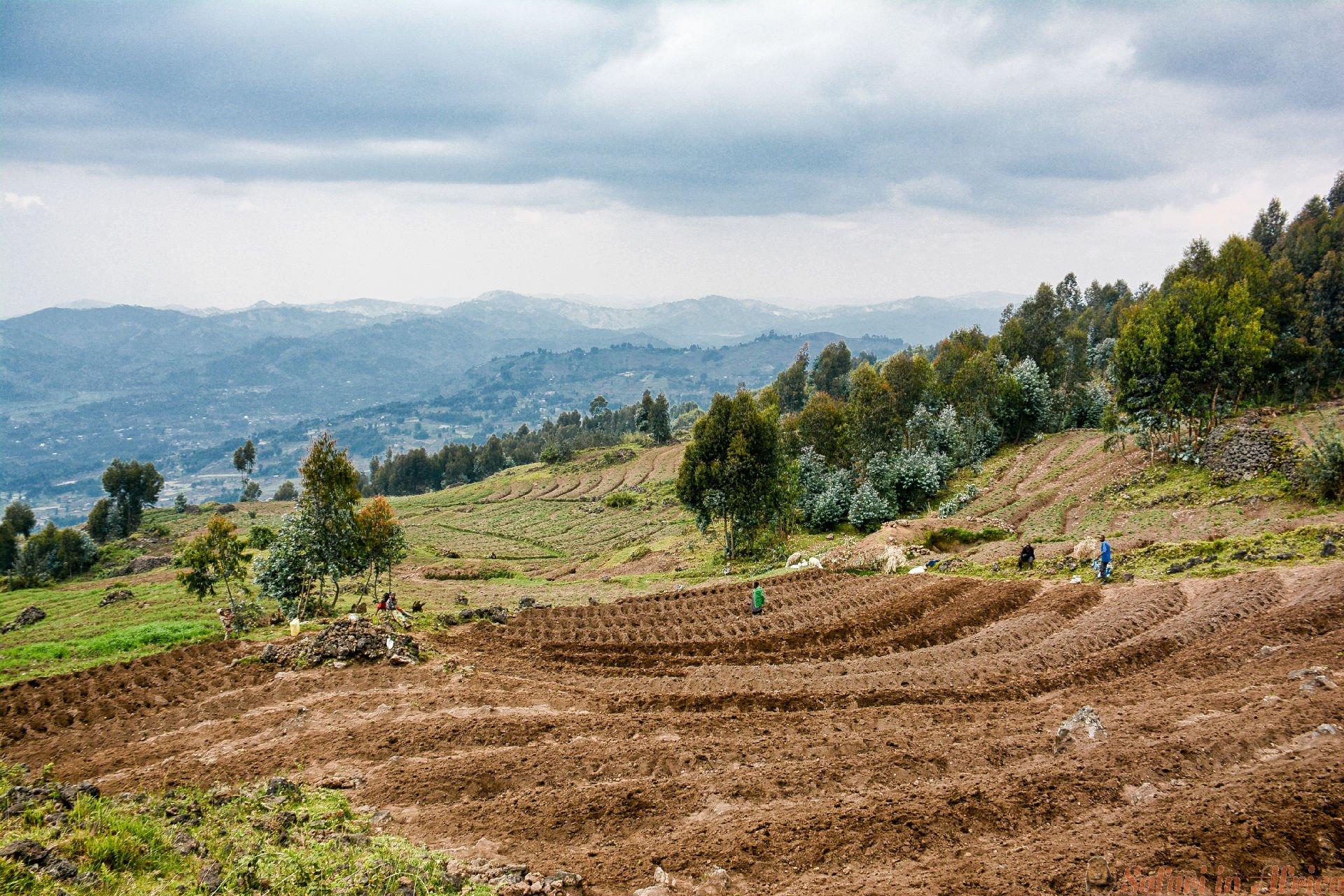 Boeren planten aardappelen in de hooglanden van Rwanda in de buurt van Volcanoes National Park