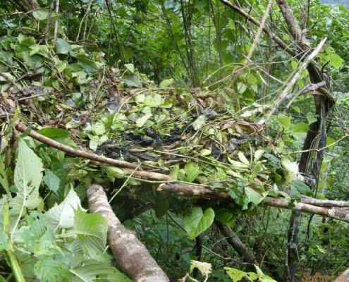 Gorilla Nest Kahuzi Biega