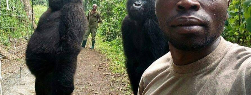 Gorilla Selfie Virunga