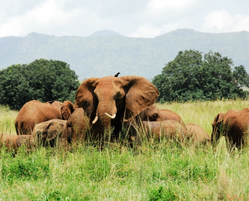 kudde-olifanten-kidepo-valley-national-park