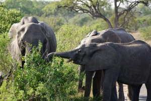 safari-in-kenia-review-gonny-1