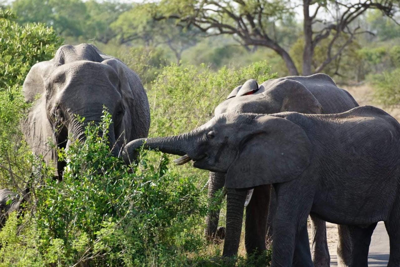 safari-in-kenia-review-gonny-1