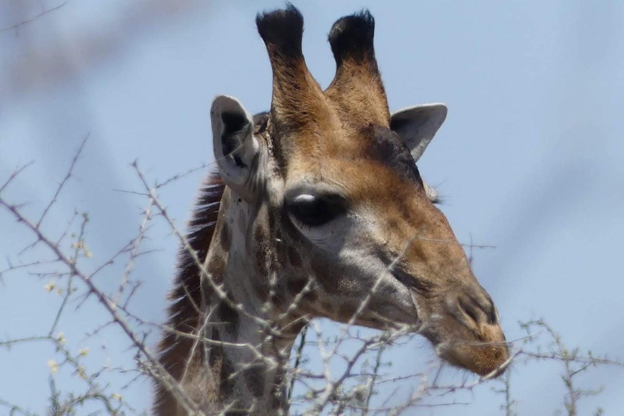safari-in-kenia-review-gonny-2