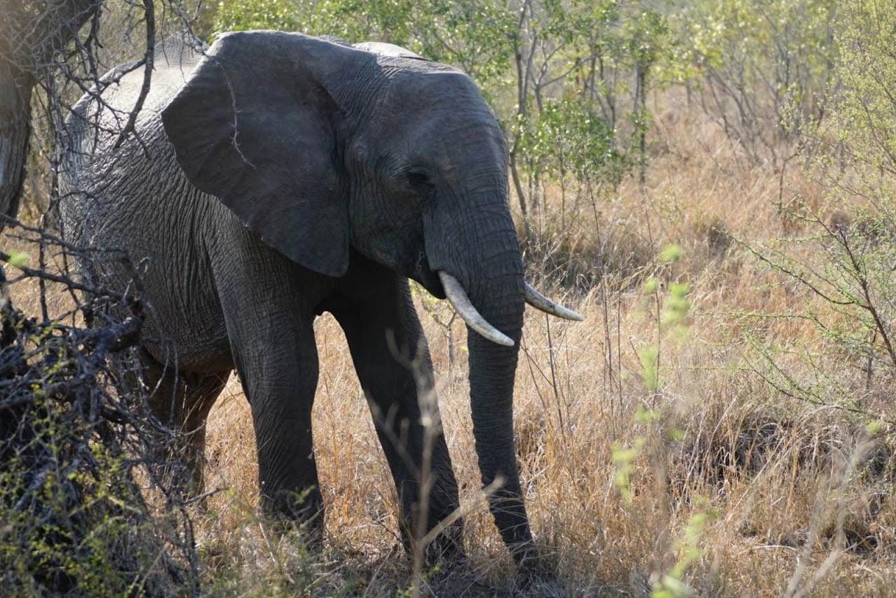 Kenia: 3 Dagen Luxe Tsavo East & Amboseli (M11)