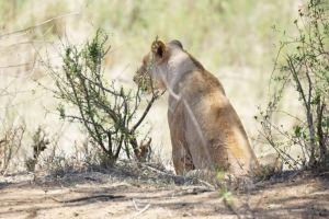 safari-in-kenia-review-gonny-3