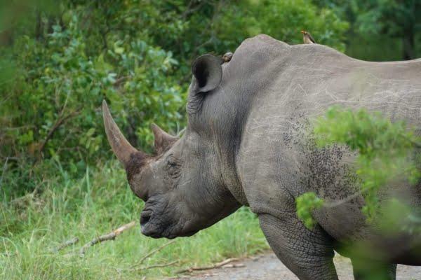 Kenia: 3 Dagen Luxe Tsavo West & Taita Hills & Amboseli