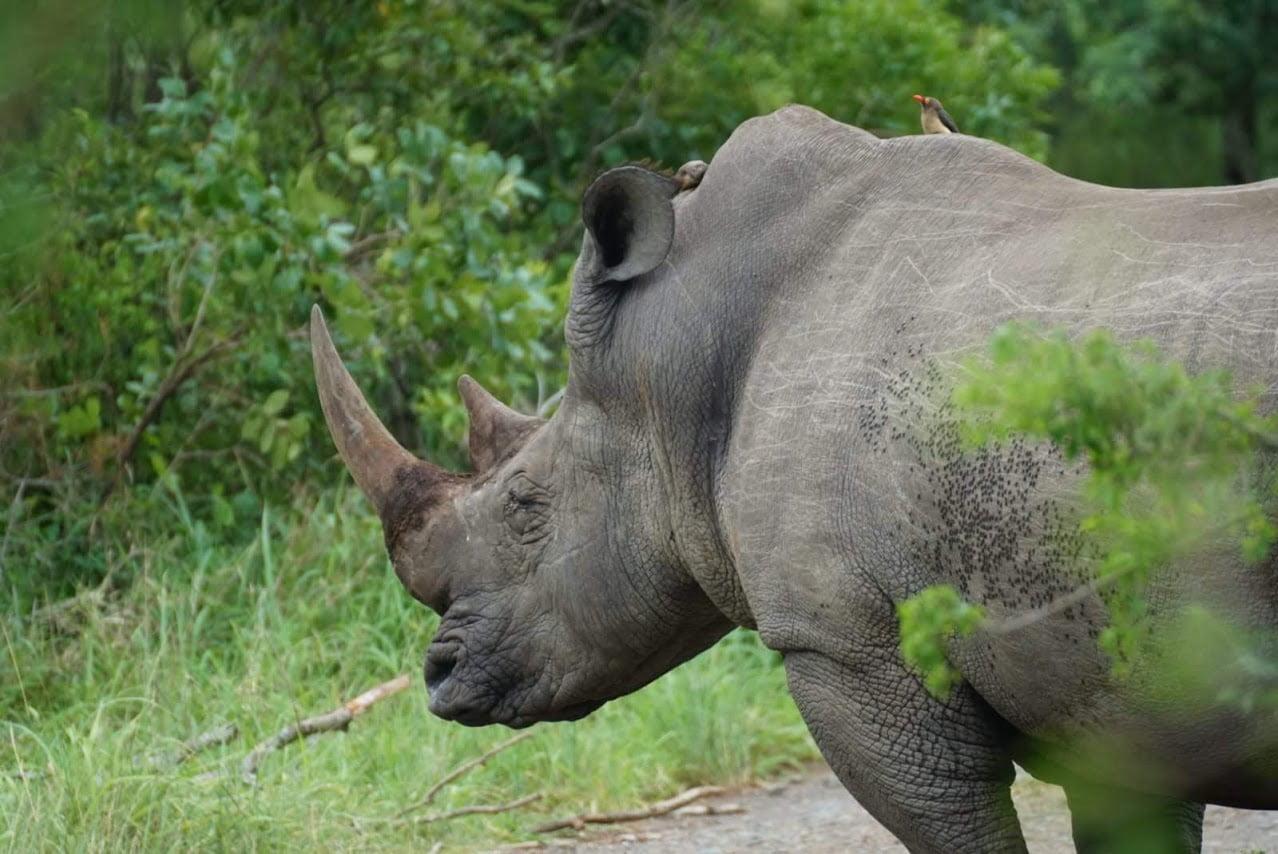 Kenia: 3 Dagen Luxe Tsavo West & Taita Hills & Amboseli (M12)