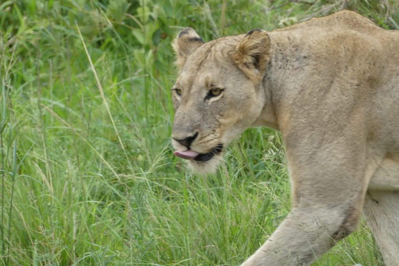 Kenia: 10 dagen Luxe Across Kenia Safari (M22)