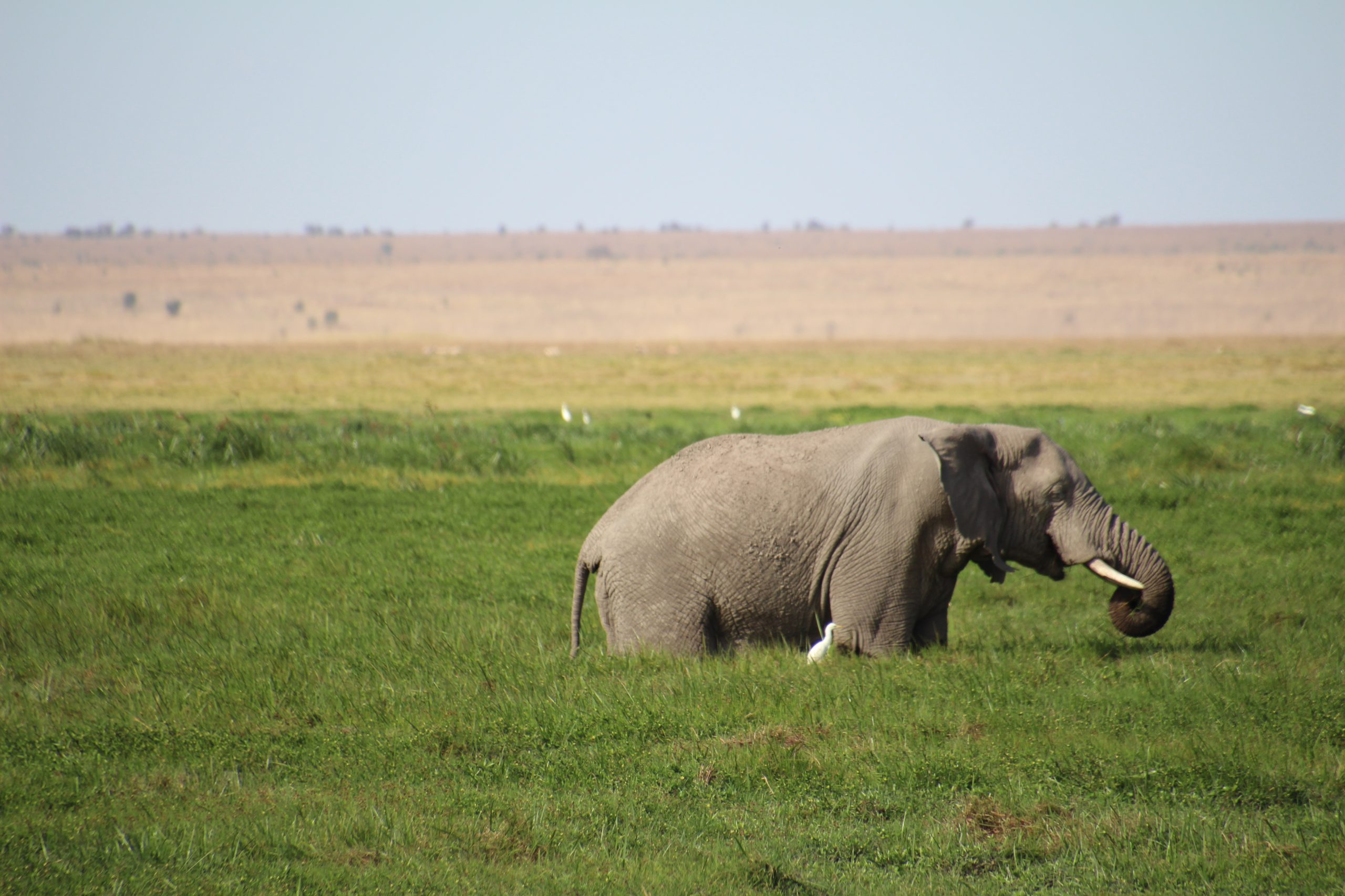 safari-in-kenia-amboseli-national-park_10