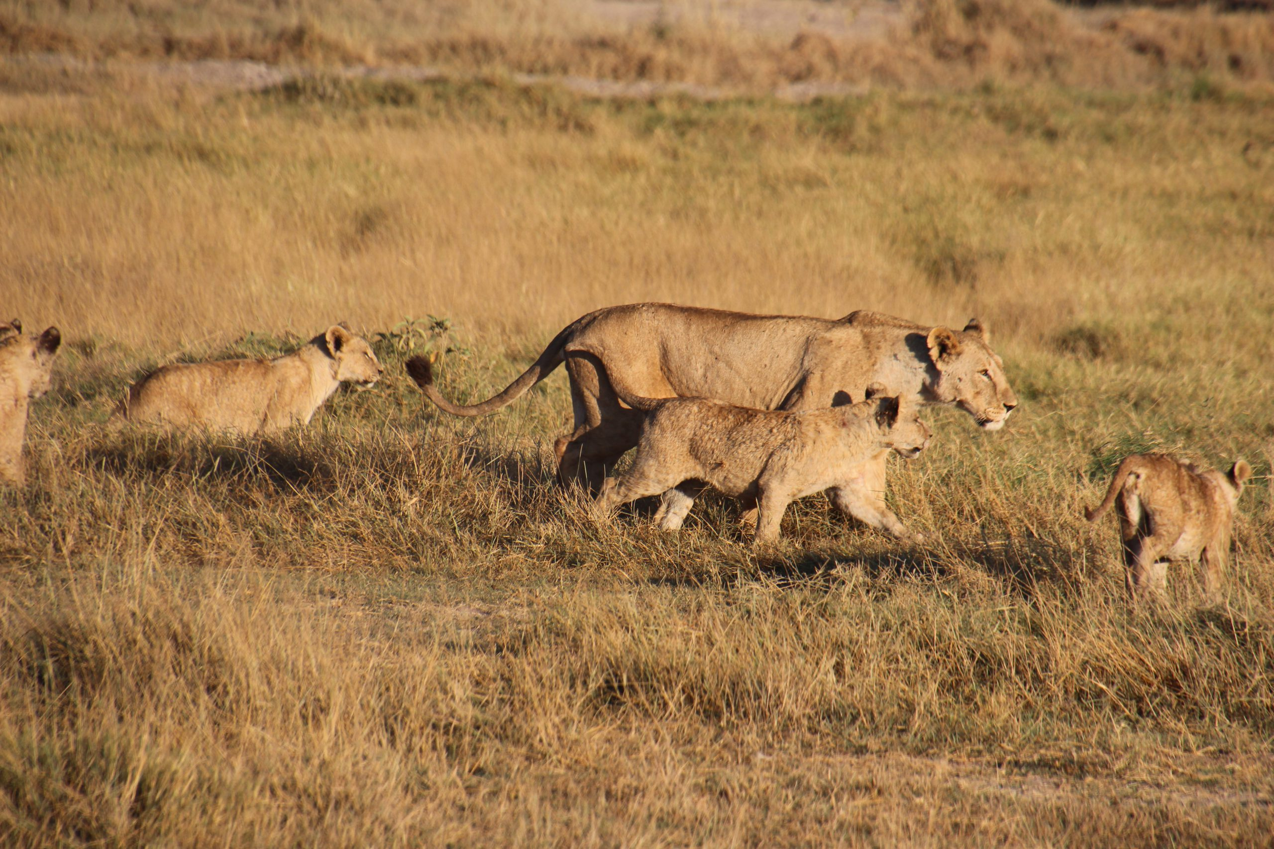 safari-in-kenia-amboseli-national-park_13