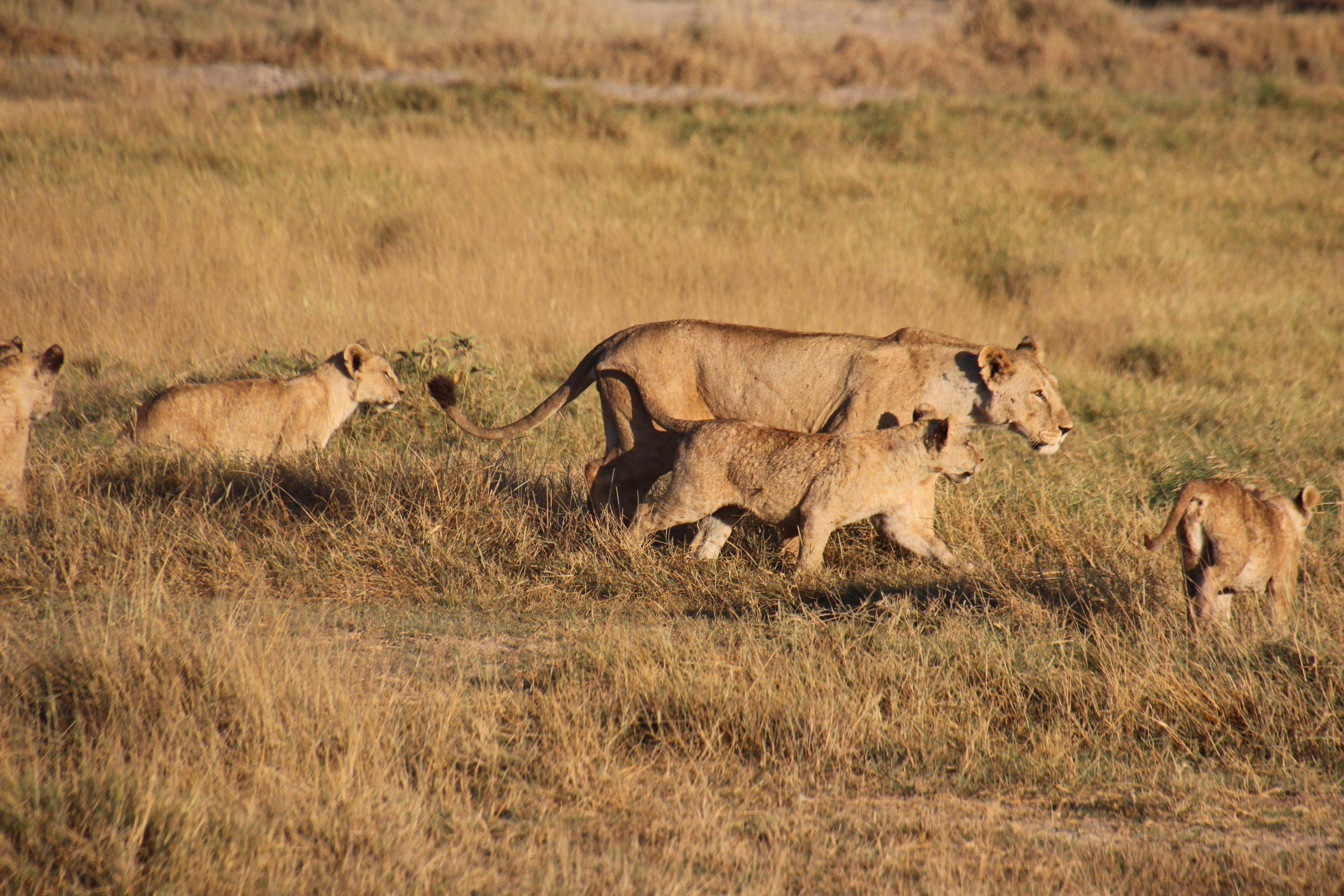 safari-in-kenia-amboseli-national-park_13