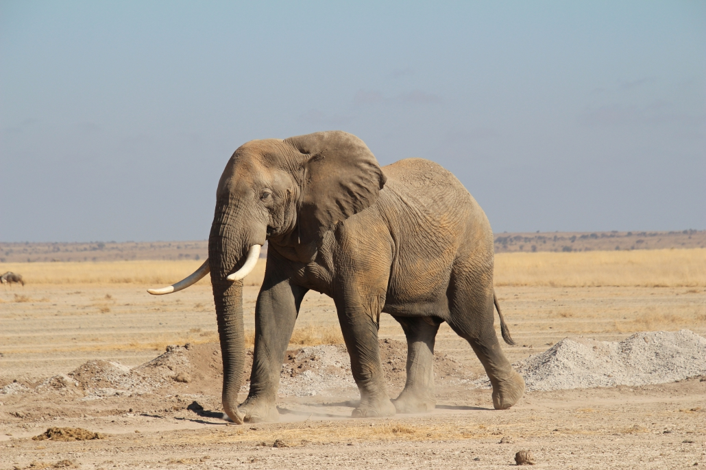 safari-in-kenia-amboseli-national-park_12