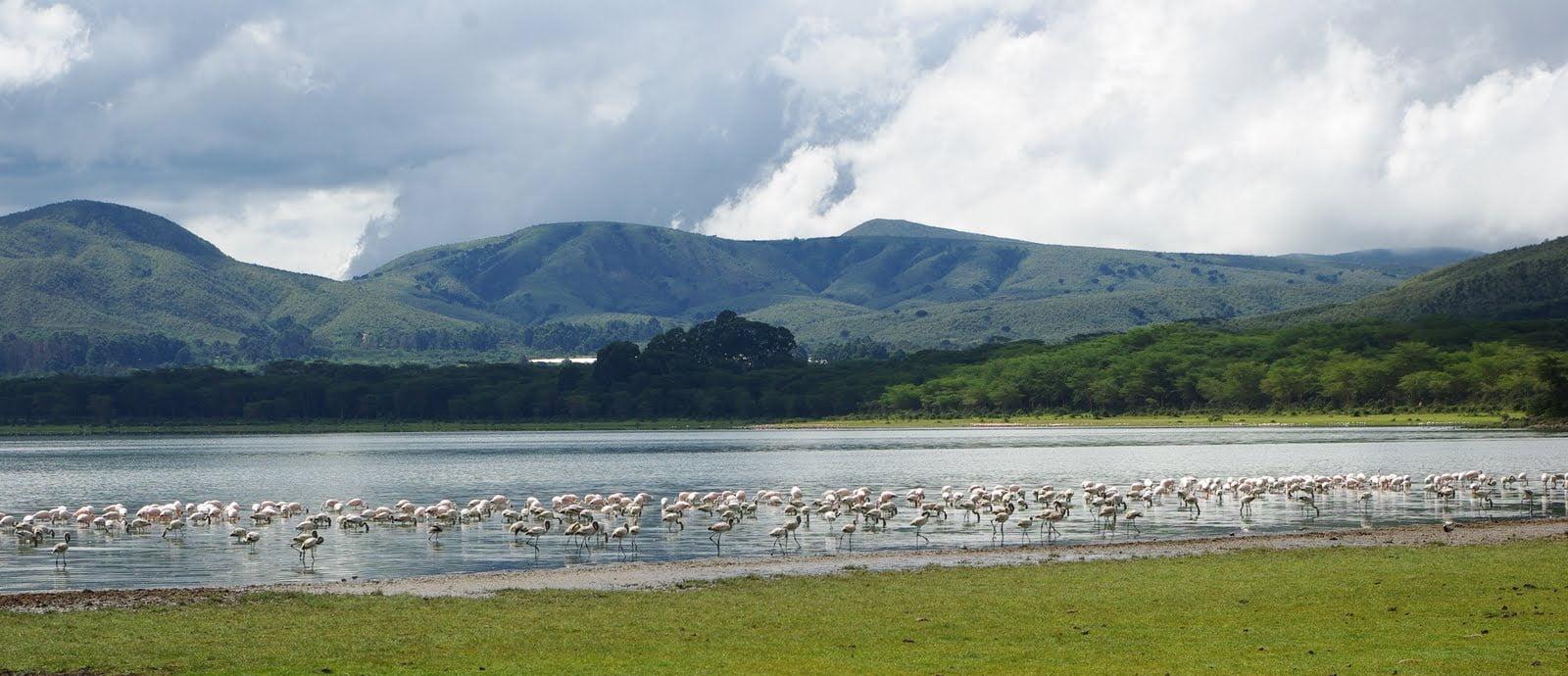 Lake_Naivasha_1