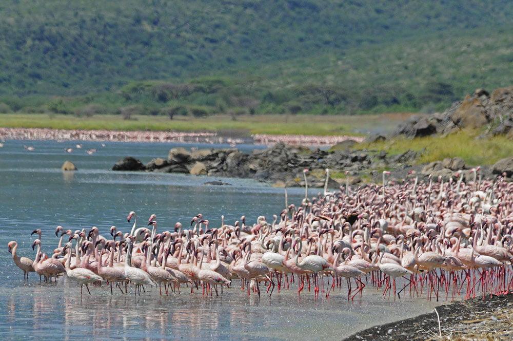 Lake_Naivasha_3