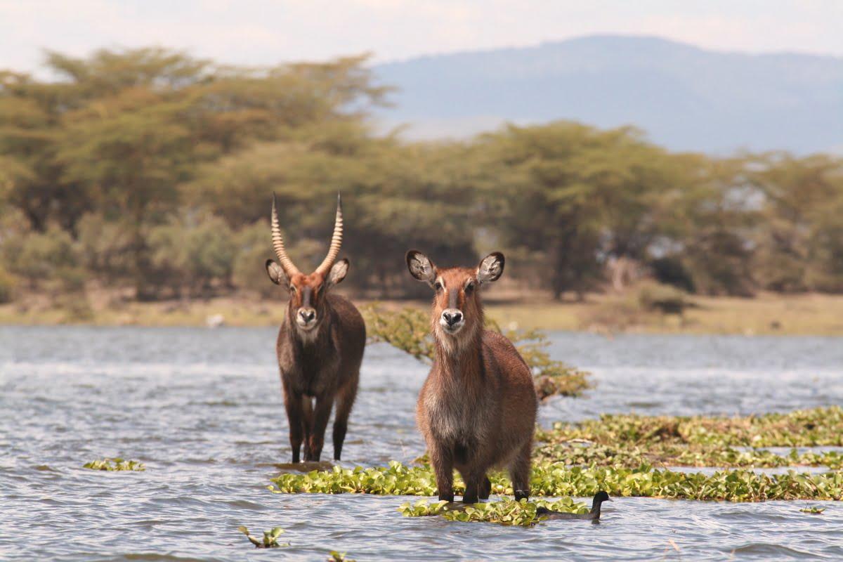 Lake_Naivasha_4