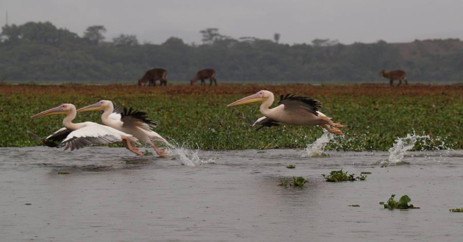 Lake_Naivasha_5