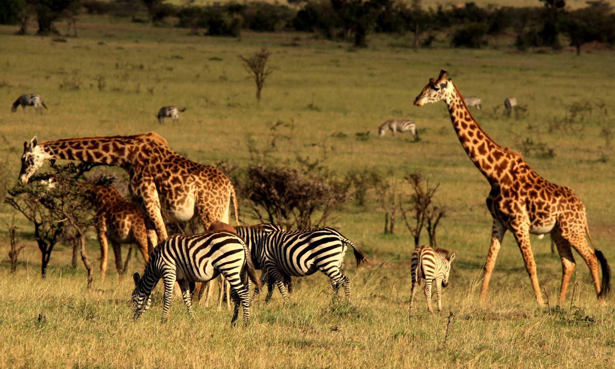 Masai_Mara_Game_Reserve_10