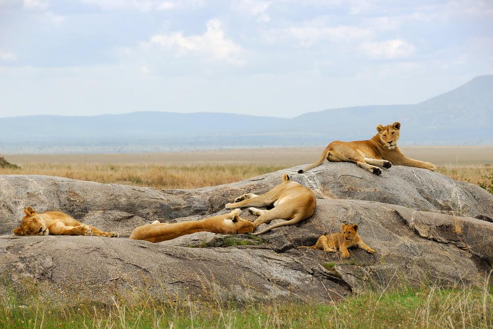 Masai_Mara_Game_Reserve_7