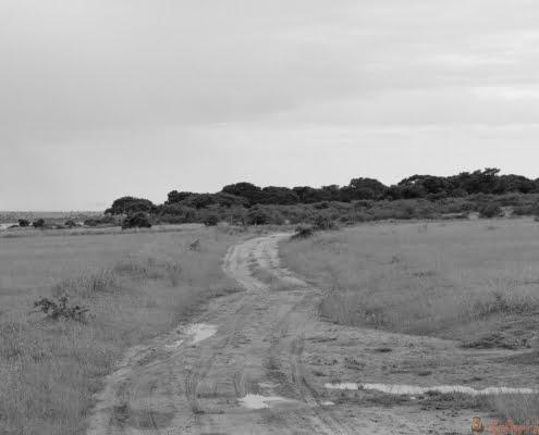 Murchison Falls National Park Safari Track B&W