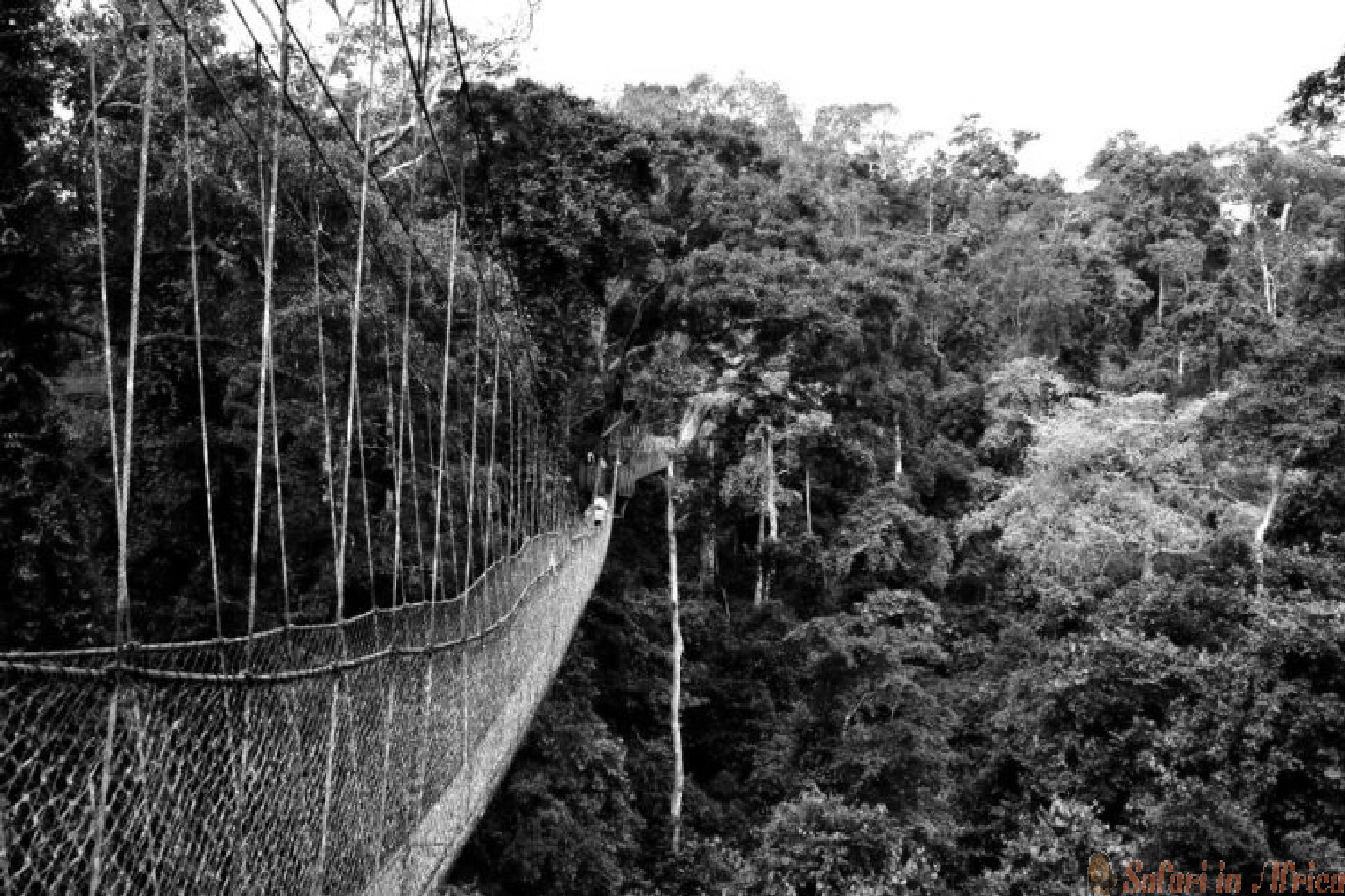 Nyungwe-bos-touwbrug B&W
