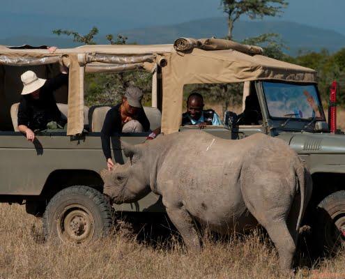 Ol Pejeta -game-drive-rhino-Kenya-Safari