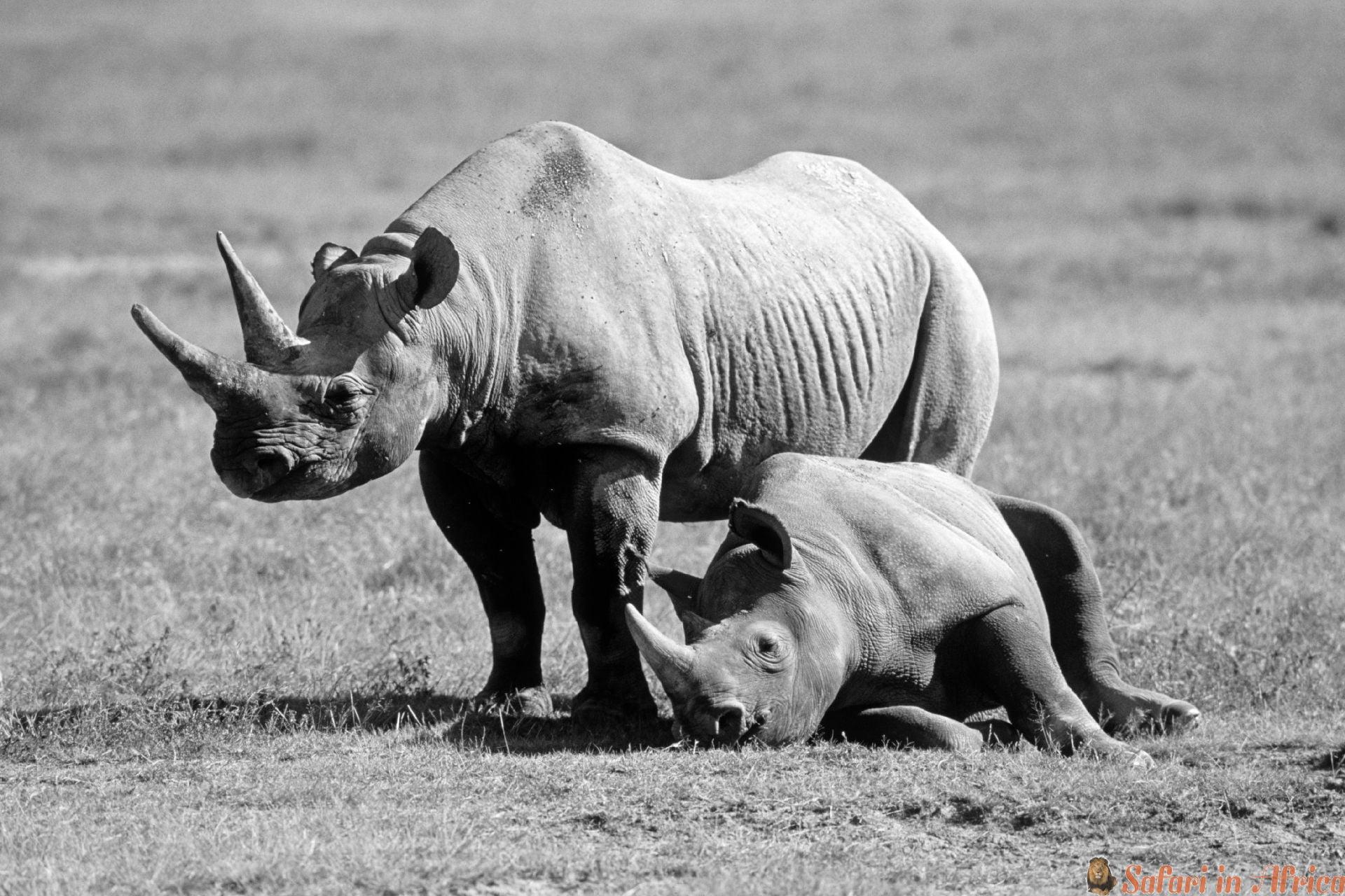 Rhino, Ngorongoro, Tanzania B&W