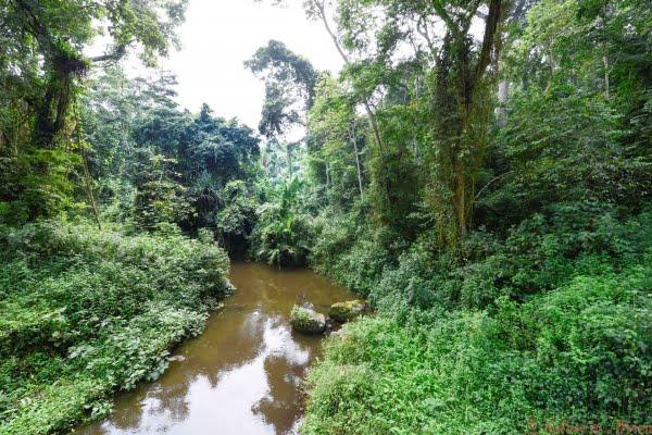 River near the rainforest of Kibale National Park, Uganda