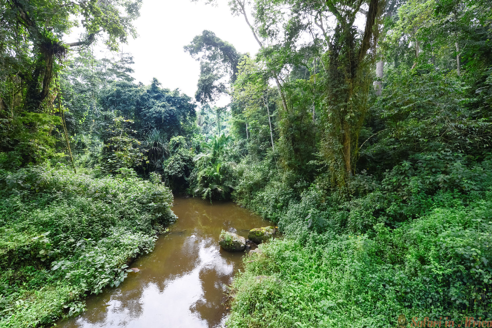 River near the rainforest of Kibale National Park, Uganda