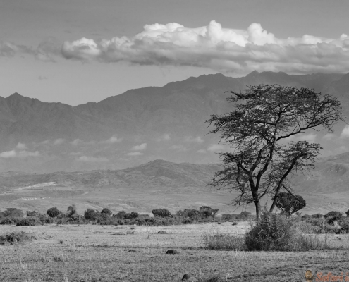 Rwenzori-gebergte, Oeganda B&W