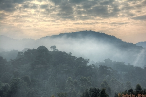 Sunrise clouds and morning mist in Bwindi Impenetrable National Park.