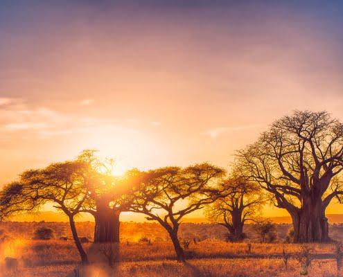 Tarangire Sunset, Tanzania
