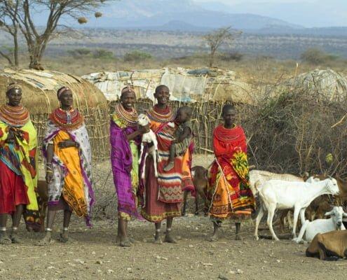 Woman of the Samburu tribe with their cattle in their village near Samburu National Park.