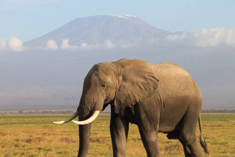 olifant_kilimanjaro