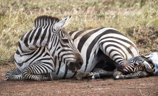 Kenia: 8 dagen Mama Mia Safari (incl. binnenlandse vlucht)