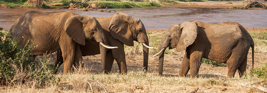 Safari in Kenia - overige safari tips