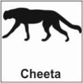safari-in-kenia-cheeta