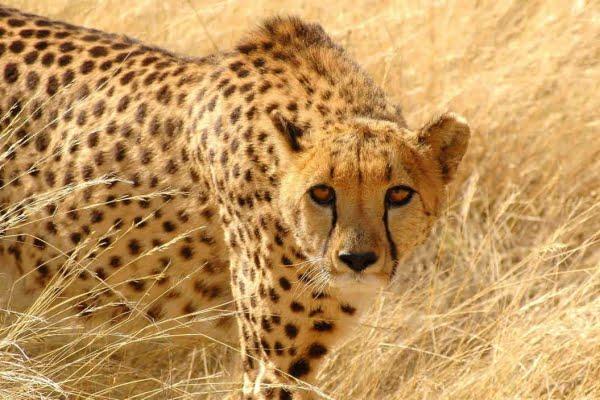Kenia: 3 Dagen Tsavo East & Amboseli (M6)