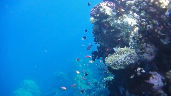 egypte-rondreis_safari-in-africa_Rrode-zee_snorkelen_01
